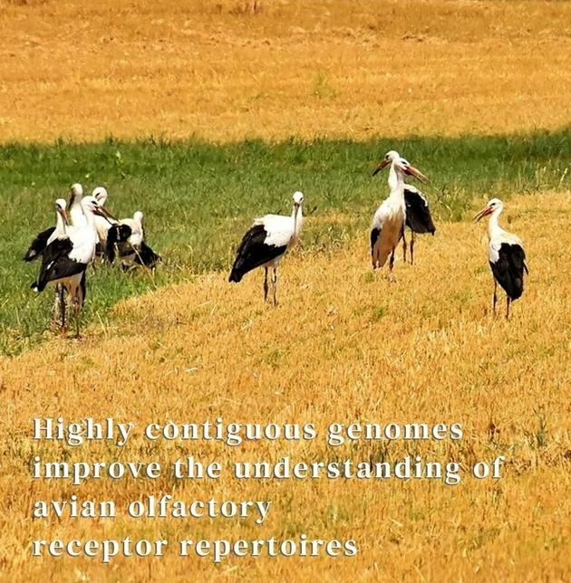 一次实验让鸟类被误会了200年它们的这种能力并不赖